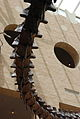 Fernbank Museum - Atlanta - Flickr - hyku (17).jpg