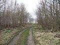 Field access road, Nelson Plantation - geograph.org.uk - 914558.jpg