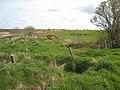 Field at Cowbog - geograph.org.uk - 820234.jpg