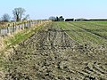 Field margin south of All Cannings - geograph.org.uk - 1743221.jpg