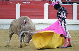 Perhaps bullfighting is not a moral wrong  My talk at the     Shin Pacific Trading T  gy    or  Okinawan bullfighting   is a traditional sport of Japan