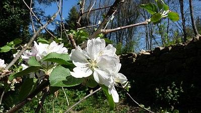 Flora del rio Parga, entre Parga y Bahamonde.jpg