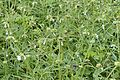 Flora of Yercaud 0315.jpg