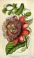 Flore des serres et des jardins de l'Europe (8594787963).jpg