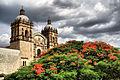 Florecer en Oaxaca.jpg