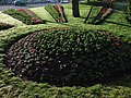 Flower beds, Courtenay Park - geograph.org.uk - 372233.jpg