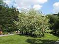 Flowering plants BCP 024.JPG