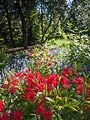 Flowers (9058984325).jpg