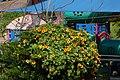Flowers - Israel (11).jpg