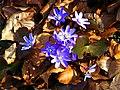Flowers - panoramio (25).jpg
