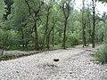 Flussbett im Auslauf der Starzlachklamm - panoramio.jpg