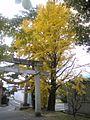 Folhas de outono - panoramio.jpg