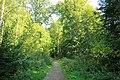 Forêt de Bon-Secours 15.jpg