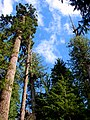 Forest (070a3aac19304b808f5c39fdf4132d24).JPG