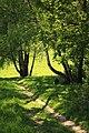 Forest gully in the Bratsevo estate.jpg
