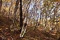 Forest in Mt.Nabeashi 12.jpg