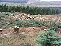 Forestry clear fell - geograph.org.uk - 558697.jpg