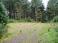 Forestry clearing - geograph.org.uk - 218880.jpg