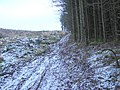 Forestry track - geograph.org.uk - 1113881.jpg