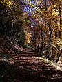 Forestwalk In Colours - panoramio.jpg