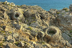 Fossil Forest, Dorset - On this ledge are some ring-shaped structures up to 2 metres across. These are moulds of gymnosperms (early coniferous trees) which died after being encased in sediment. Most of the trees were upright leaving round holes, but some had fallen leaving elongate coffin-shaped moulds.