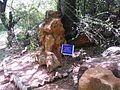 Fossil wood preserved in natural lime stone.jpg
