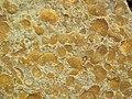 Fossiliferous sandstone (Vinton Member, Logan Formation, Lower Mississippian; Mohawk Dam emergency spillway, western Coshocton County, Ohio, USA) 5 (27192559636).jpg