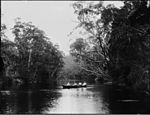 Four men in rowing boat on river possibly Lane Cove (3072377799).jpg