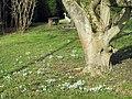 Frühlingserwachen - panoramio (5).jpg