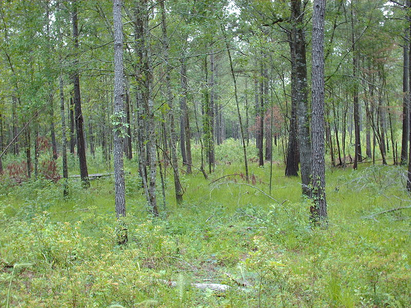 Francis Marion Forest.jpg