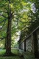 Friedhof Rosenberg Winterthur - Urnengräber.jpg