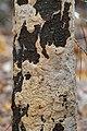 Fungi - Gatineau Park 01.jpg