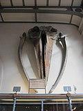 Galerie-paleo-anatomie 02 baleine.JPG