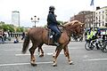 Garda horses - Flickr - D464-Darren Hall.jpg
