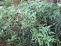 Gardenology.org-IMG 1049 rbgs10dec.jpg