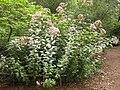 Gardenology.org-IMG 1435 bbg09.jpg