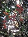 Gardenology.org-IMG 2049 hunt0903.jpg