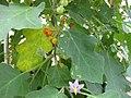 Gardenology.org-IMG 7654 qsbg11mar.jpg