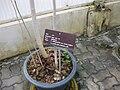 Gardenology.org-IMG 7783 qsbg11mar.jpg