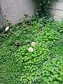 Gardens in Baghdad 43.jpg