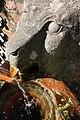 Gargoyle fountain - panoramio.jpg