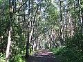 Gdansk forest along beach july 2006 019 - panoramio.jpg