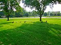 Geese at the Alliant Energy Center - panoramio.jpg