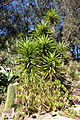 General view - San Francisco Botanical Garden - DSC09775.JPG