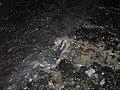 Geological Fault Gevra 03.JPG
