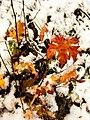 Georgia snow IMG 4144 (27147334249).jpg