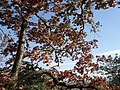 Gfp-iowa-effigy-mounds-tree-with-red-leaves.jpg