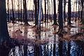 Giebelmoor Grosses Moor nass.jpg