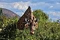 Giraffe, Ruaha National Park (23) (28120488334).jpg