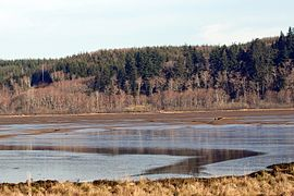 Grays Harbor National Wildlife Refuge.jpg